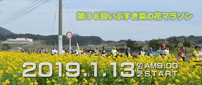 いぶすき_菜の花_マラソン
