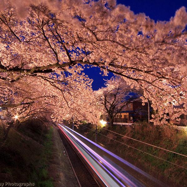 桜のトンネルを走り抜けよう!2017ふじやまお花見ファンサイクリング!【マラソン大会情報】