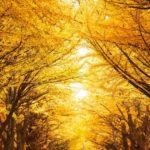 秋は抜け毛の季節!秋こそ頭皮ケアを!【マッチョ塾】