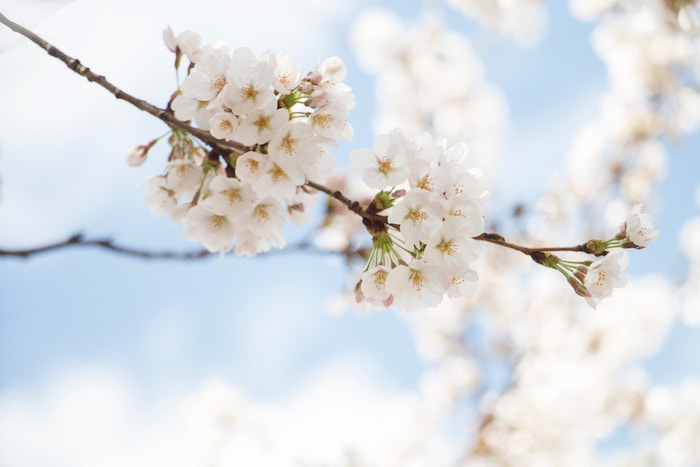 春-デリカシー -1
