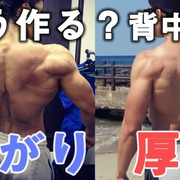 【解説】どう作る?背中の厚みと広がりを鍛え分ける【筋トレ】
