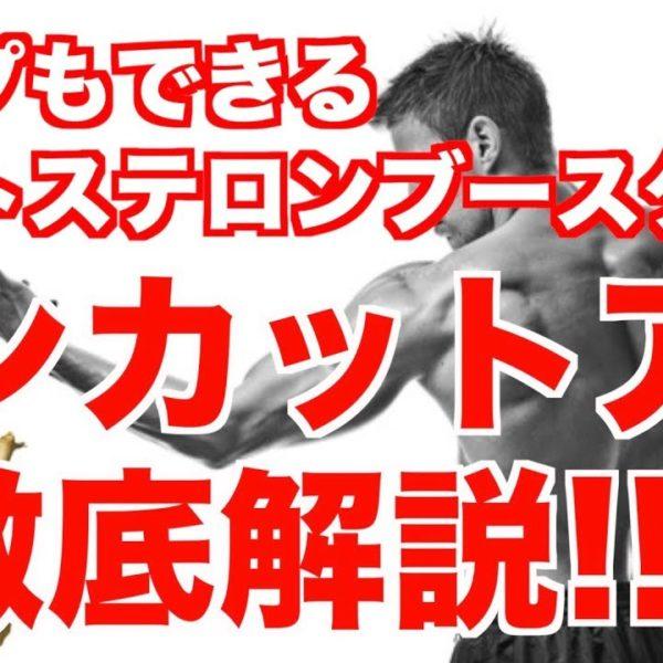 【トンカットアリ】パンプもできるテストステロンブースターを徹底解説!!