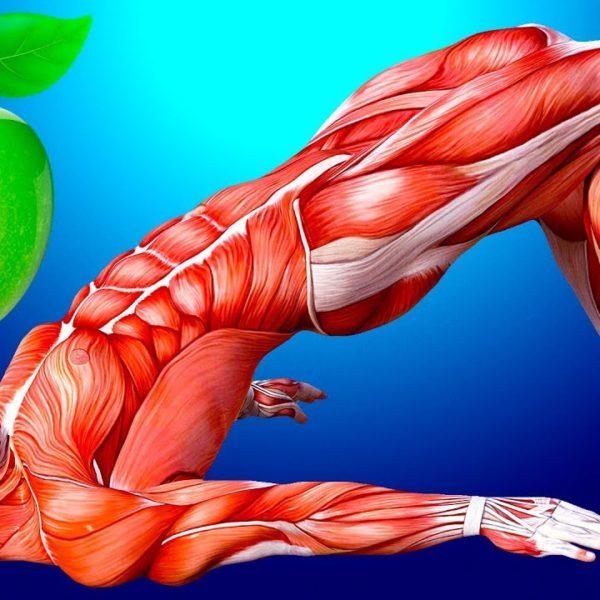 毎日リンゴ1つを食べて体の変化を見てみよう