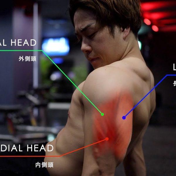 三頭筋の鍛え方を解説&家でも腕を太くすることが出来る自重トレ3種目