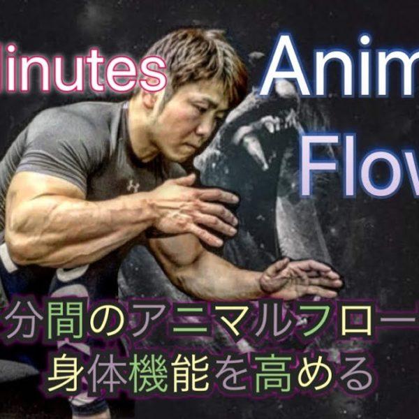 5分のアニマルフローで体の機能アップデート[5Minute Animal Flow]