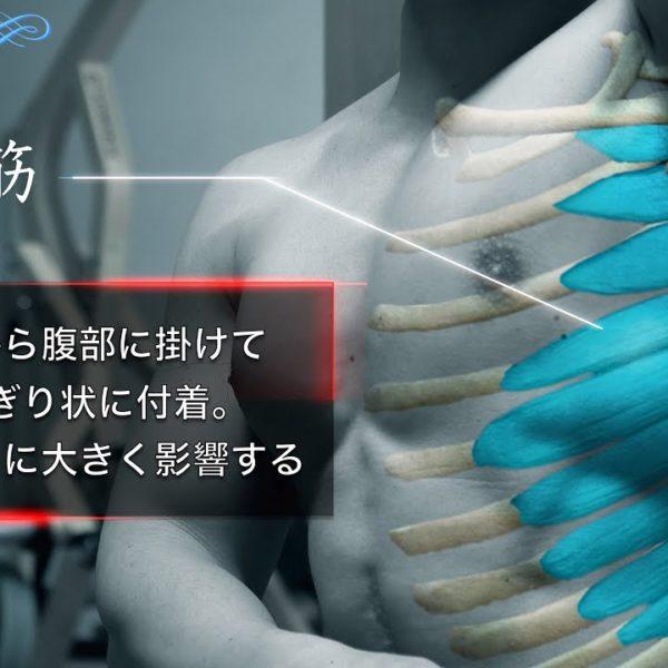 【筋トレ】前鋸筋の鍛え方 全て見せます