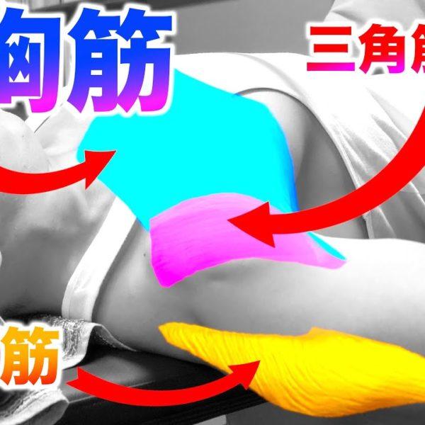 【科学的解決】ベンチプレスで大胸筋にしっかり効かせる方法【筋トレ】